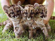 Three Cute Cats - credit to: swipurr.com