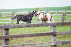 Ridgeview Ranch, Iron Ridge Wisconsin  The horses are part of the wedding in their natural setting.