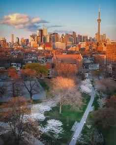 San Francisco Skyline, Toronto, World, Travel, Viajes, Destinations, The World, Traveling, Trips