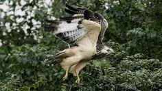 Weer veel roofvogelnesten Friesland vernield - Dit moet stoppen!