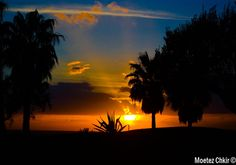 Photograph Palms by Moetez Chkir on 500px