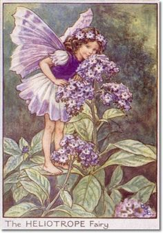 Cicely Mary Barker - Flower Fairies of the Garden - The Heliotrope Fairy Painting