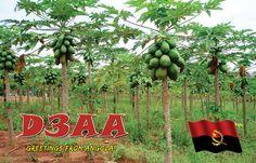 Qsl Kaart uit Angola