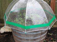 Mini serre parapluie - Source : Gardentherapy-com