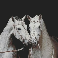 Idlys' twin horses, Aelis and Aeveda, named after the two twin Queens of Rhaenia.
