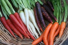 http://www.westcoastseeds.com/topicdetail/topic/how-to-grow-carrots-from-seed---some-tricks/ Grow the best carrots ever with these grower secrets!