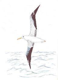 Excelente Imagenes Aves Ilustracion Volando Popular Resultado De Imagen Para Gaviotas Vol En 2020 Aves Gaviotas Volando Ilustracion De Ave