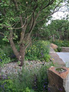 Cleve West garden, Chelsea flower show 2016