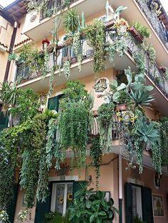 Unbelievable balconies overflowing with plants bI giardini pensili di Babilonia… Cacti And Succulents, Planting Succulents, Planting Flowers, Dream Garden, Garden Art, Garden Plants, Balcony Plants, Balcony Gardening, Nature Plants