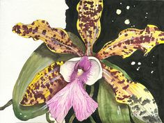 Orchid 16 Elena Yakubovich Painting  - Orchid 16 Elena Yakubovich Fine Art Print