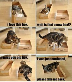 Please take me back! | Cat Meme. My cats all day everyday! They love boxes, can't get enough of them, but they each have a favorite type of box, so even better! =D ~Aims