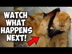 Cute Cats & Dogs playing with each other compilation! Funny cats and dogs playing compilation! 2017 -  #animals #animal #pet #cat #cats #cute #pets #animales #tagsforlikes #catlover #funnycats  Learn how to speak cat! Click HERE for the cat bible! Cute Cats & Dogs playing with each other compilation! Funny cats and dogs playing compilation!2017 Pets and animals are so adorable, cute and... - #Cats