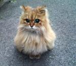 Cutest Kitty Evaa