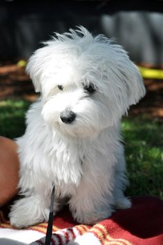 I had a dog that looked just like this when I was a kid. His name was Snoopy! :)