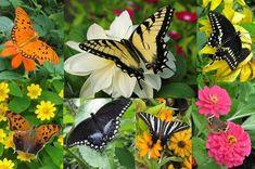7 façons d'attirer les papillons dans votre jardin et de les sauver de l'extinction