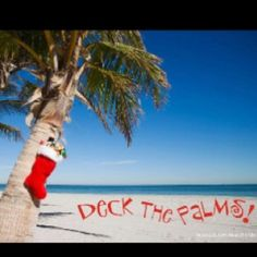 Christmas In Florida Images.160 Best A Florida Christmas Images Coastal Christmas