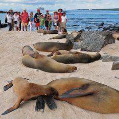 Sea lions colony in Española Island, #Galapagos #Ecuador
