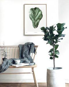 Botanics / Ficus
