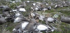 Deadly lightning strike kills 323 reindeer in Norway | Inhabitat - Green Design, Innovation, Architecture, Green Building