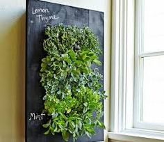 Image result for herb growing in the kitchen