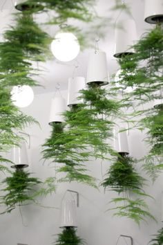 Air Ferns. Massed Boskke Sky Planters in this stand for ecological bathrooms