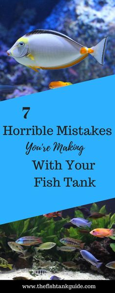 Making these 7 mistakes can really reek havoc on your aquarium and your tropical fish. The fish tank survival guide. tank ideas saltwater Making these 7 mistakes can really reek havoc on your aquarium and your tropical. Saltwater Aquarium Beginner, Saltwater Fish Tanks, Tropical Fish Tanks, Tropical Aquarium, Marine Aquarium, Reef Aquarium, Aquarium Fish Tank, Marine Tank, Marine Fish