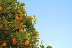 Orange - Increases Kapha. Decreases Vata and Pitta.