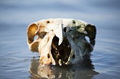 Found this skull while walking dogs at river, so stuck it in the water and attempted some art.
