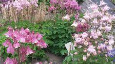 fiori e profumi a Marentino