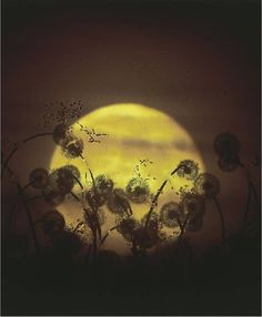 Susan Derges' Photograms.