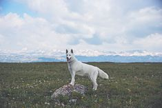 My Adopted Dog's Adventures: From Life In A Cage To Life On The Road | Bored Panda