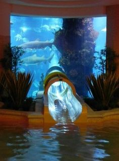 Go on an aquarium waterslide. You slide down this long clear tube and you get to see fish and coral as you shoot through. They have them in some hotels, including a hotel in Las Vegas.