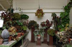 begonia-house.small.jpg (1280×851)