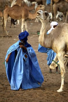 Africa |  Sights and Sounds.  Photo taken in Mauritania at the Nouakchott Camel Market.