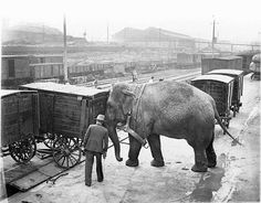 Elephant loading the train. Sydney, ca. 1932. Sam Hood. From the collection of the State Library of New South Wales.