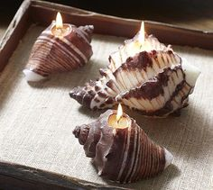 Scented Shell Candles #potterybarn