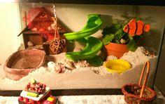 Hermit crab super sand playhouse set up.  Great   crabitat!!