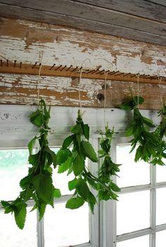 Drying herbs idea
