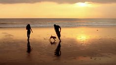 stock-footage-couple-walking-on-beach-with-dog-at-sunset-in-bali.jpg (400×224)