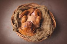 Puppy Dogue de Bordeaux | Photography by Britt Woodall | www.littlebloomstudio.com