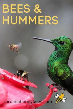 Keep Bees Away, Getting Rid Of Bees, Bird Barn, Barn Owls, Bee Hummingbird, Colorful Animals, Colorful Birds, Bee Friendly, Birds And The Bees
