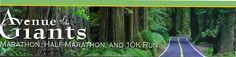 Avenue of the Giants. Marathon , half , and 10k. Redwood forest,CA. Would love to run this one day...