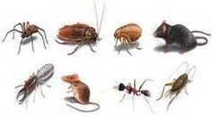 office pest control provide best  all type of termite and auther infaction    control now you can visit us- www.sydneypestservices.com.au/