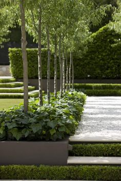 Peter Fudge creates gardens that connect in deep and meaningful ways. Peter has been designing beautiful gardens since Every garden design has… Modern Landscaping, Outdoor Landscaping, Contemporary Garden Design, Landscape Design, Back Gardens, Small Gardens, Formal Gardens, Outdoor Gardens, Minimalist Garden
