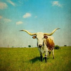 Fine Art Photograph Western Photography Texas by 3LPhotography, $25.00