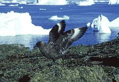Albatross, Shearwaters and petrels, Storm Petrels, Diving Petrels. Here is the complete list: http://en.wikipedia.org/wiki/List_of_birds_of_Antarctica. A delight for bird watchers