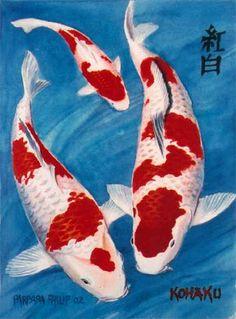 Kohaku Koi. watercolour. 250 x 350 mm. sold