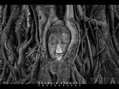 a tree of desire - Google-haku