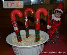 "Cool Elf on a Shelf ideas! I especially love Day 10. Santa's ""Elf"" leaves a Candycane Garden Planting Kit that on Day 12 M&M candy canes magically grew in the Candycane Garden!"
