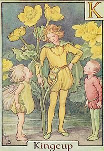 "Cicely Mary Barker - Flower Fairy Alphabet ~ Golden King of marsh and swamp,  Reigning in your springtime pomp,  Hear the little elves you've found  Trespassing on royal ground:-   ""Please, your Kingship, we were told  Of your shinning cups of gold;  So we came here, just to see - Not to rob your Majesty!"" Golden Kingcup, well I know  You will smile and let them go! Yet let human folk beware How they thieve and trespass there: Kingcup-laden, they may lose In the swamp their boots and shoes!"